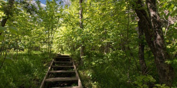 Accès à la rivière Sainte-Anne - Chalet Refuge