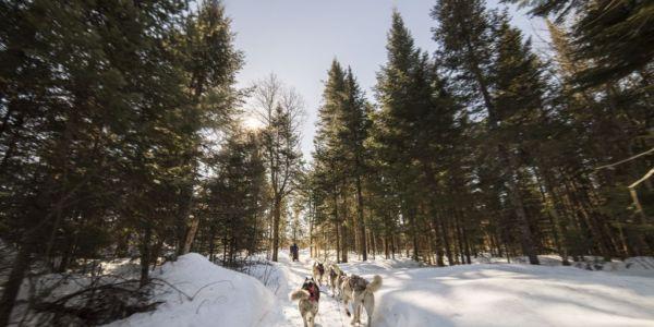 Activité traîneau à chiens - Au Chalet en Bois Rond