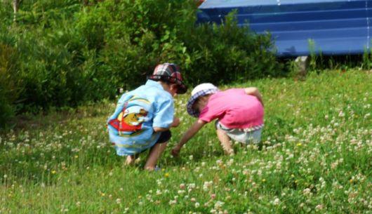 Fin juillet/début août, les petites fraises sont un délice pour petits et grands. Et la cueillette un passe temps agréable.